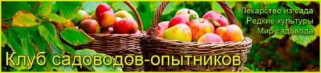 Сады Сибири 75